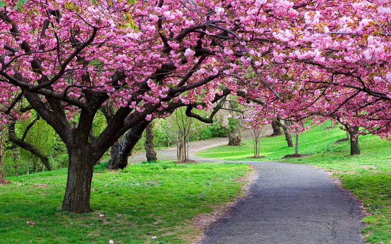 Красивые картинки на рабочий стол природа цветы